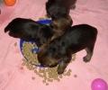 J 23.12.2008_47