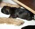 J 23.12.2008_7